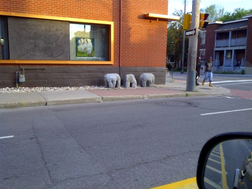 Sighted: Small herd of small pachyderms